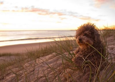 photo of a dog in the grass on the beach , words were later added as an editing example