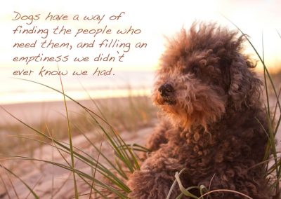 photo of a dog on the beach with a caption. Dogs have a way of finding the people who need them and filling an emptiness we did not know we had.